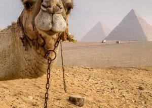 Slow Dive Rotes Meer Ägypten