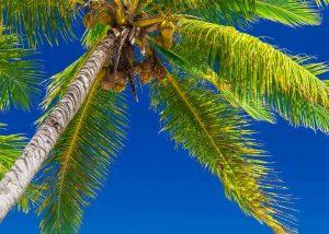 Slow Dive Südsee Fiji